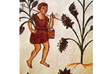 Le piante medicinali degli antichi Marsi