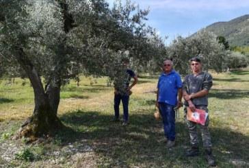 Olio d'oliva Peligno: annata da record anche grazie agli studenti del Serpieri